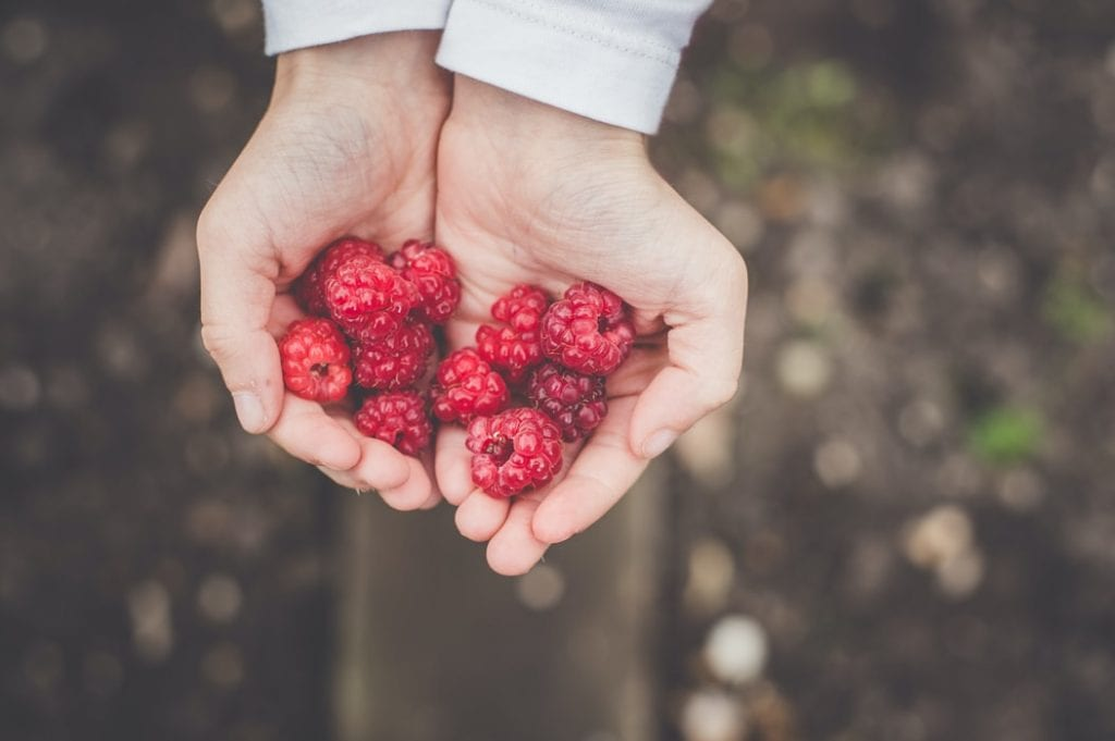 Handful of berries in Finnish forest