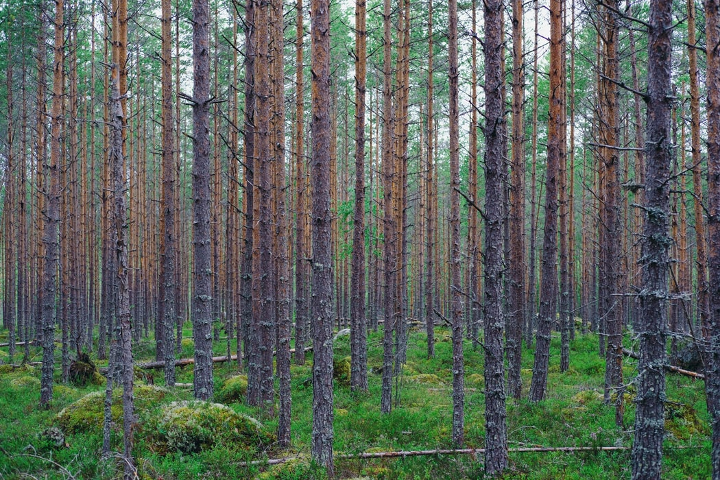 Into the Forest I Go: A Documentary on Finnish Forests