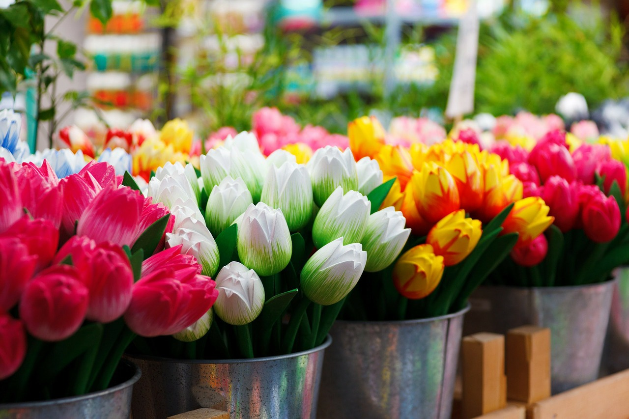 Colorful tulips of Amsterdam