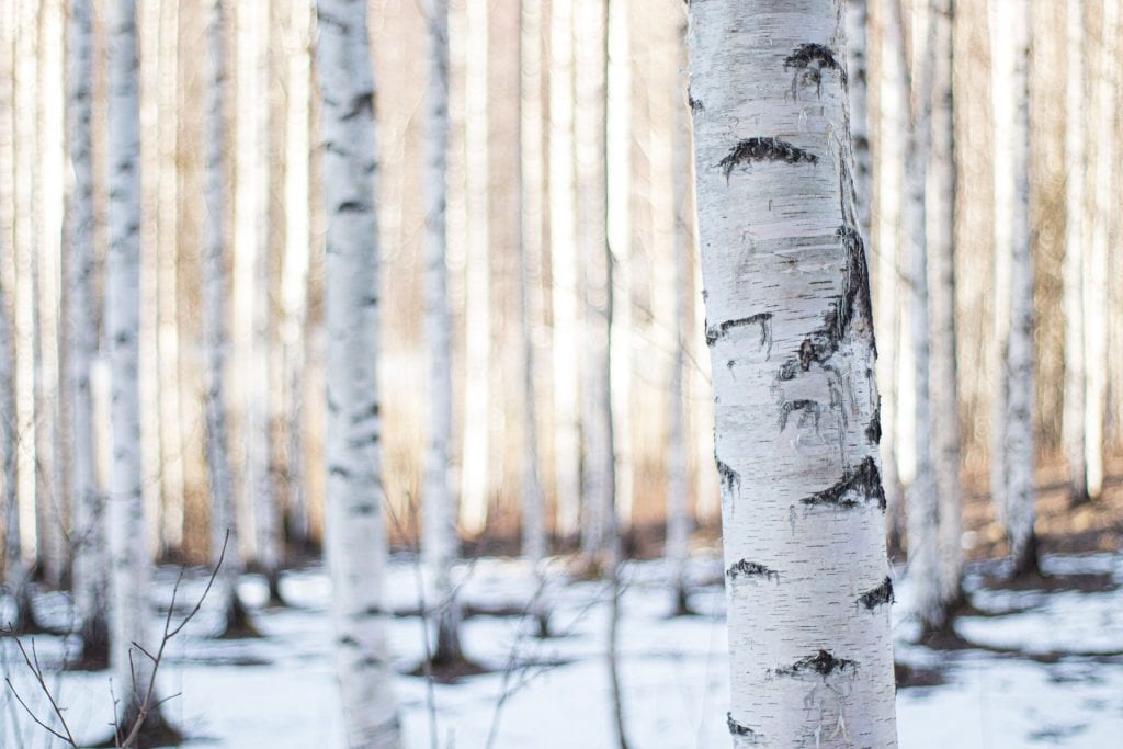 a winter forest in finland