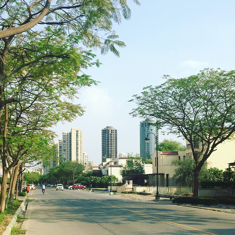 Buildings, road and trees