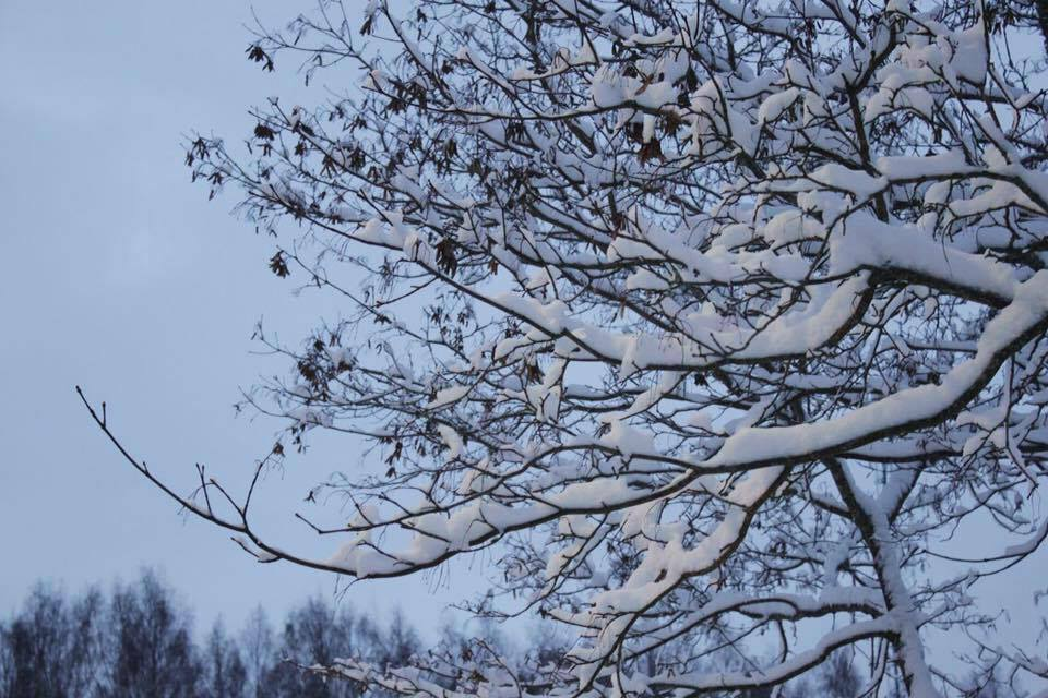 snow covered branch and grey winter sky in Finland