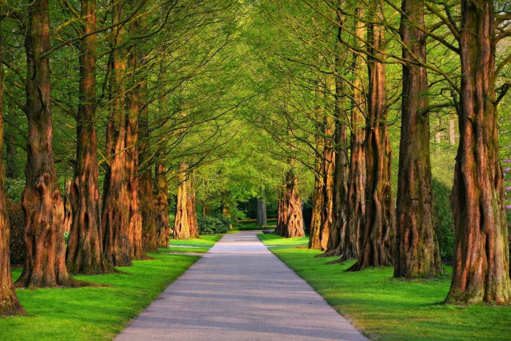a road with trees on the sides