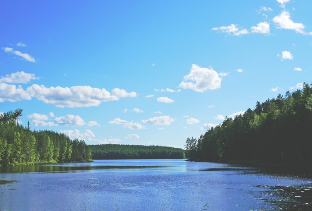 A finnish lake surrounded by forest