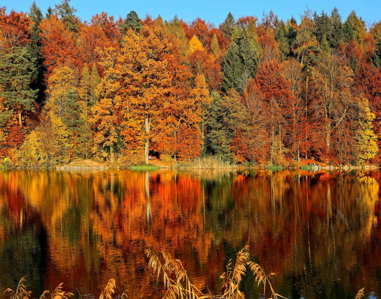 autumn forest by a lake