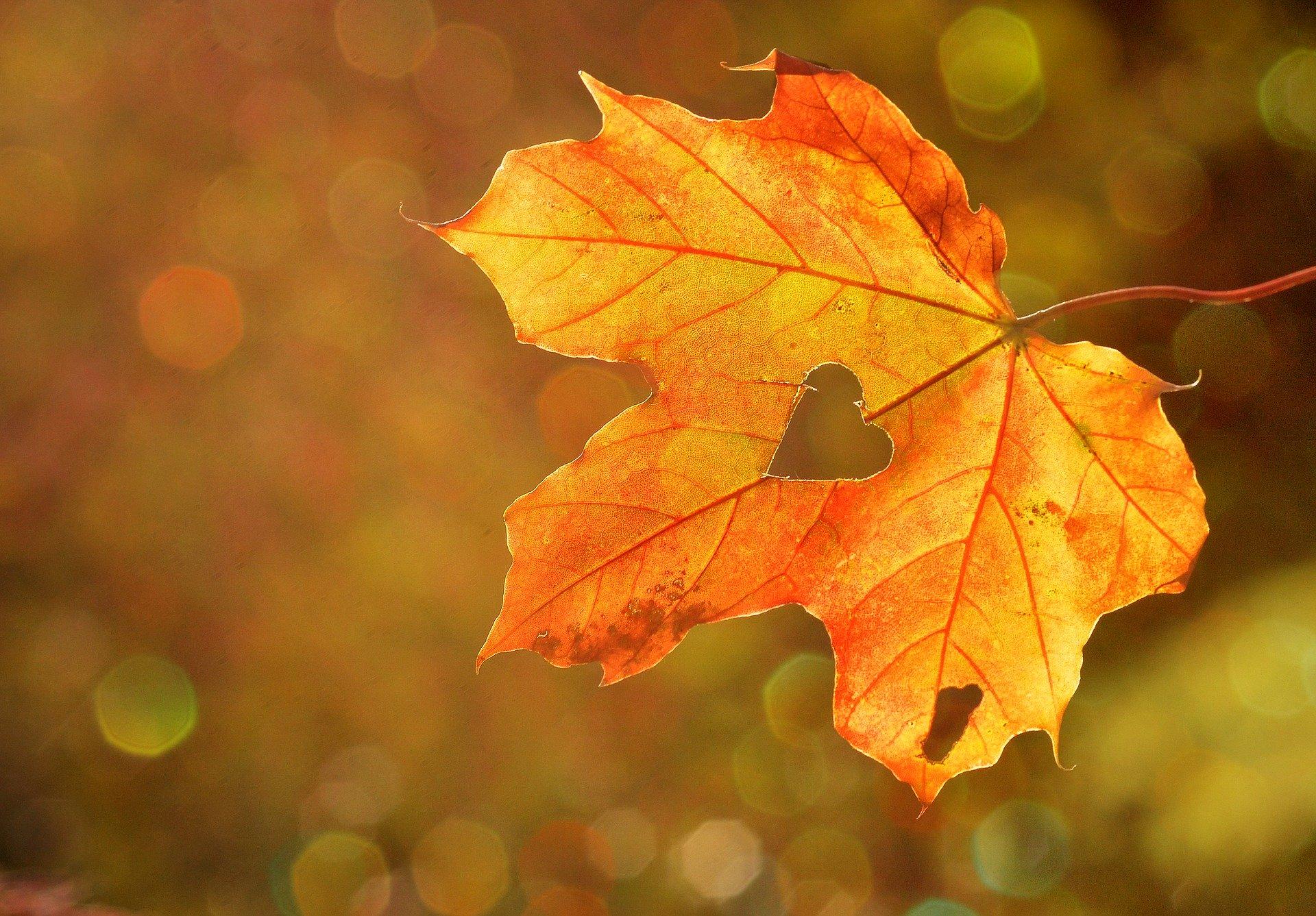 Activities to do During Autumn Season