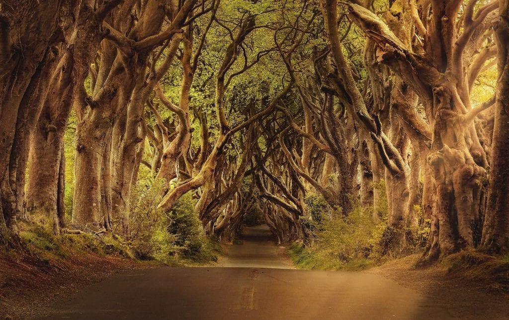 Even regular roads look magical in Ireland!